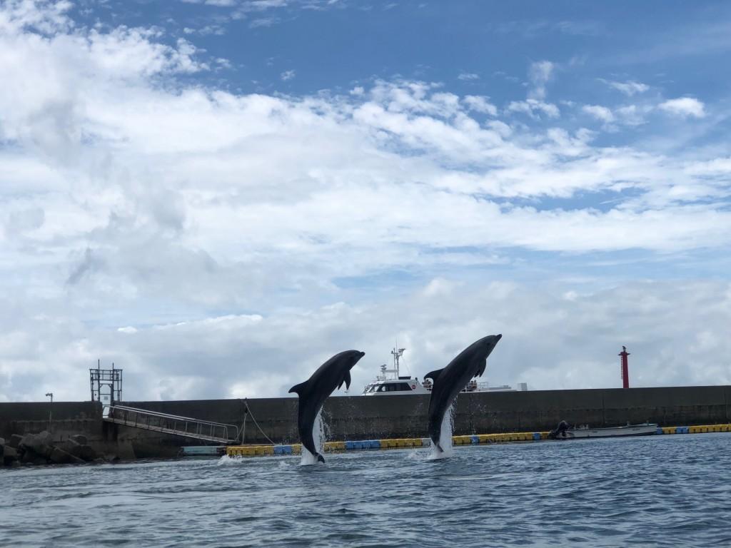 日間賀島 イルカ 海 自然 ビーチランド イベント